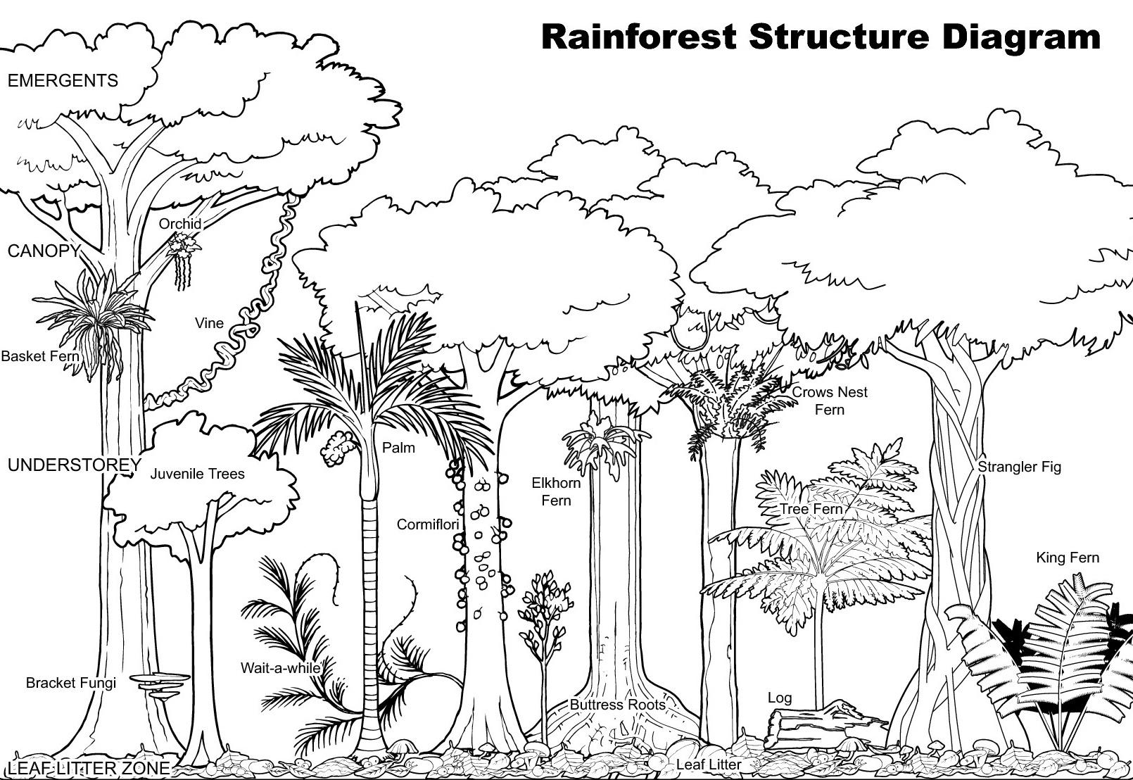 rainforest+diagram.jpg