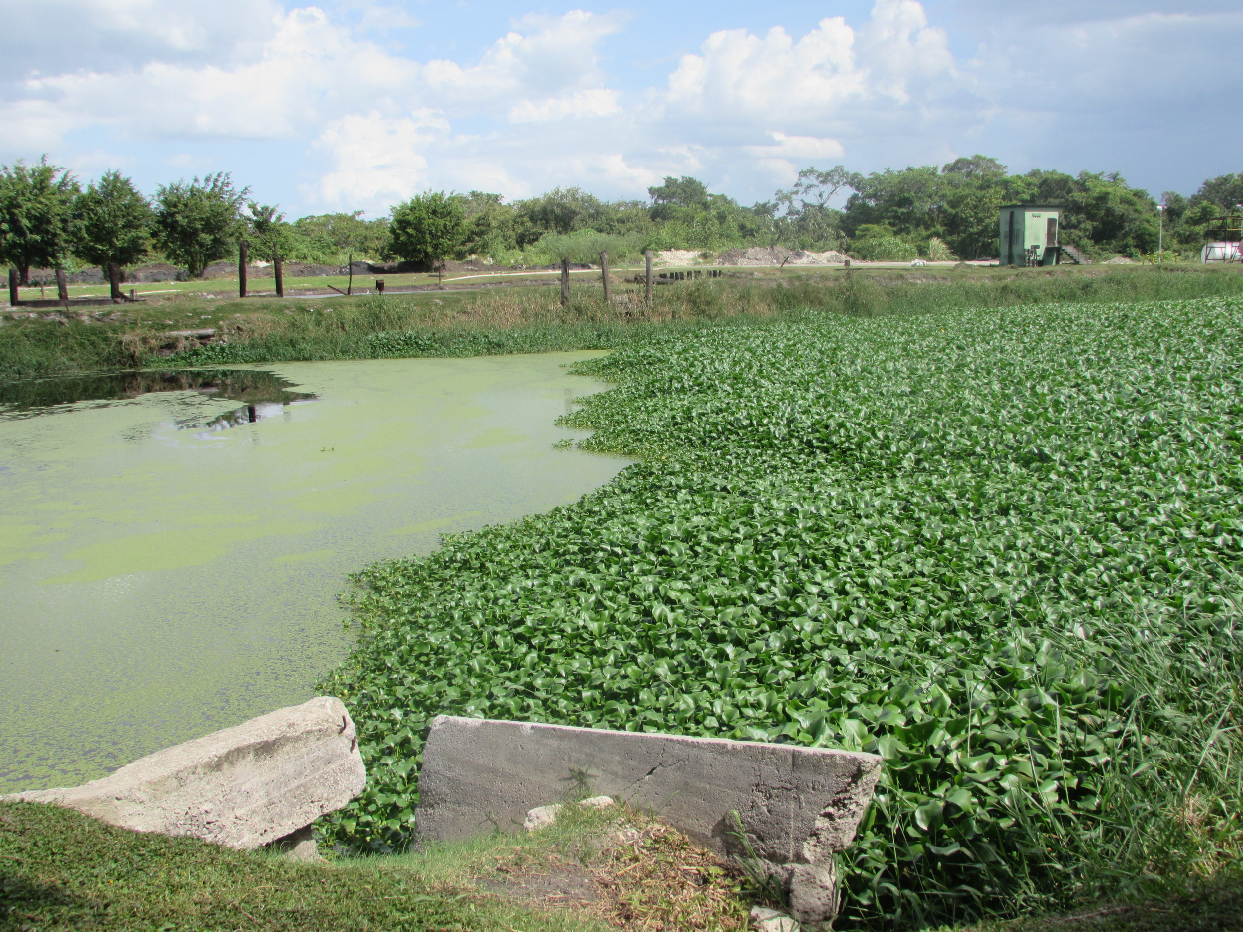 One of the Oxidation Ponds at the BSI Waste Water Treatment System