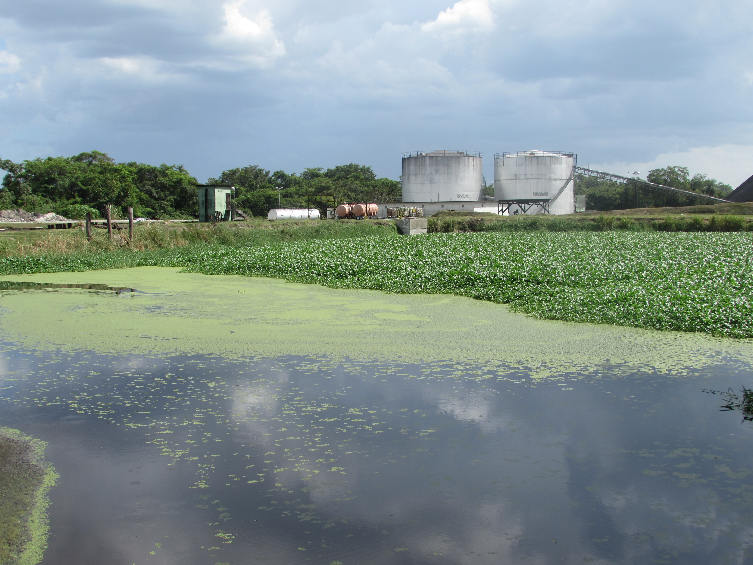 One of the Oxidation Ponds at BSI's Waste Water Treatment System