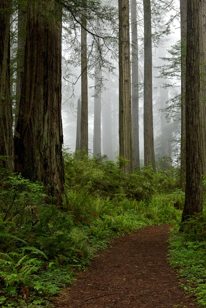 Path to the Fog I