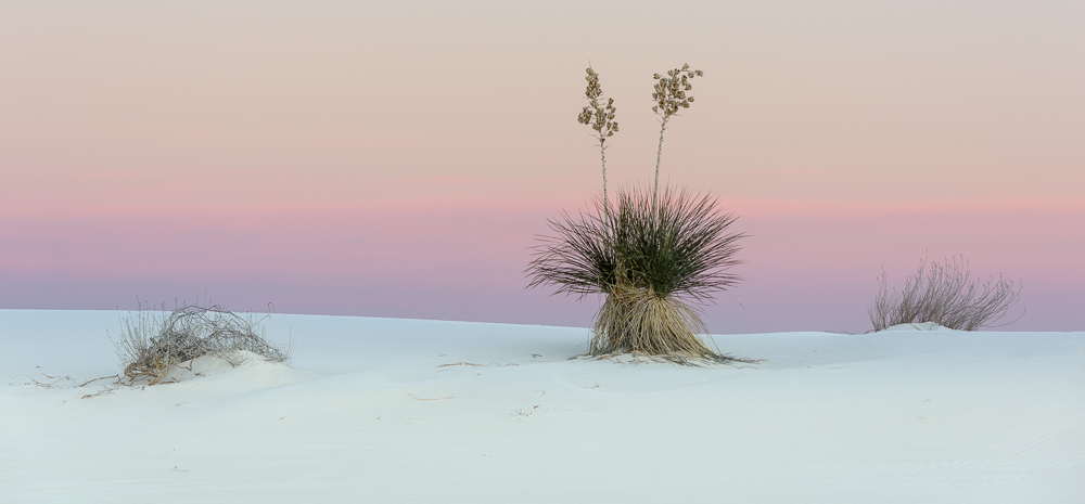 Yucca and Morning Sky