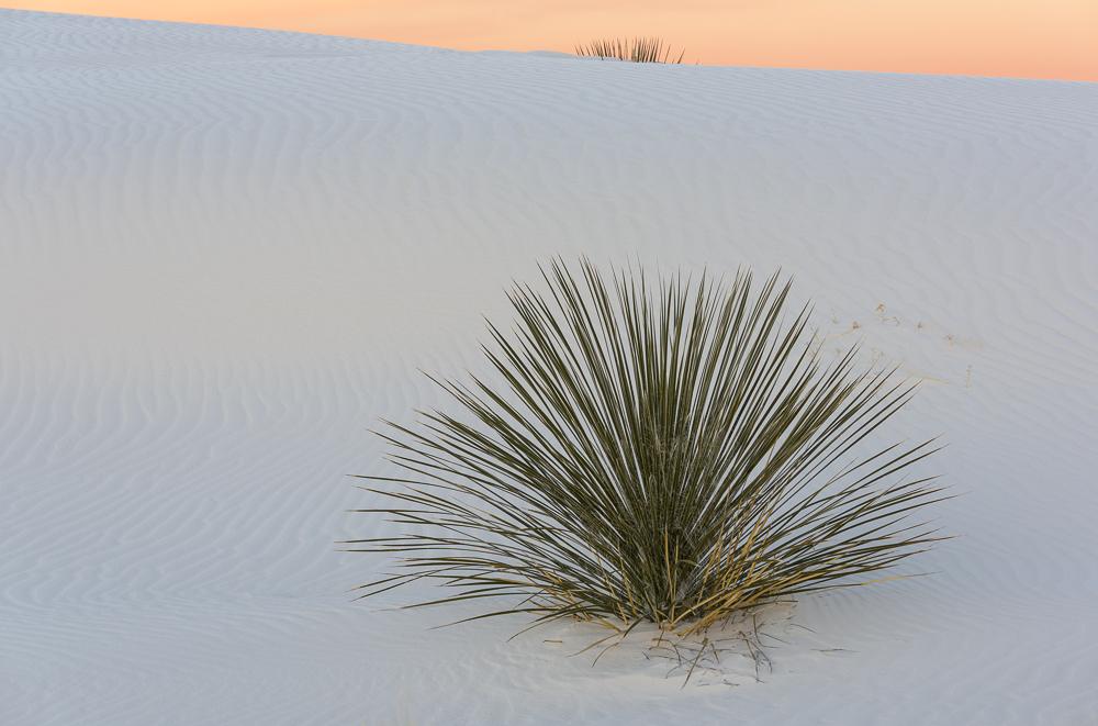 Yucca Peeking
