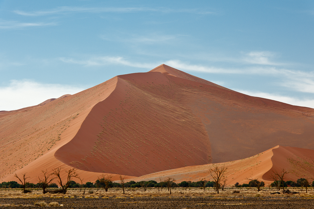 Dunes Vegetation