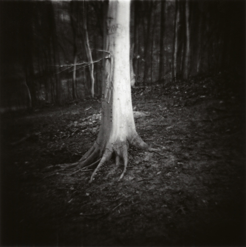04Karen_Lone Tree.jpg