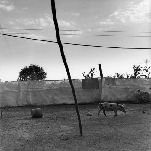 11Karen_Pig in Cuba.jpg