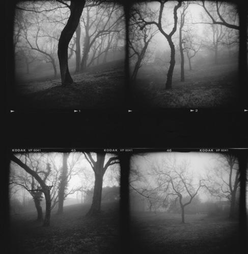 19Karen_Trees.jpg