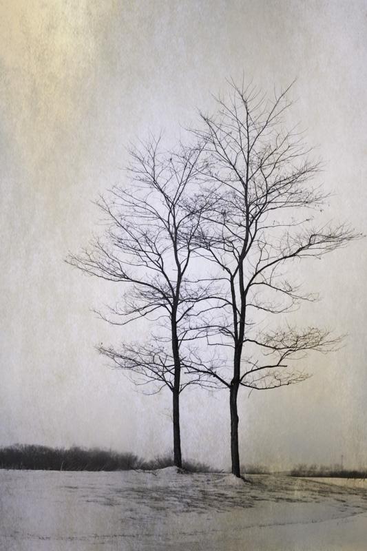 08-Two Trees 2.jpg