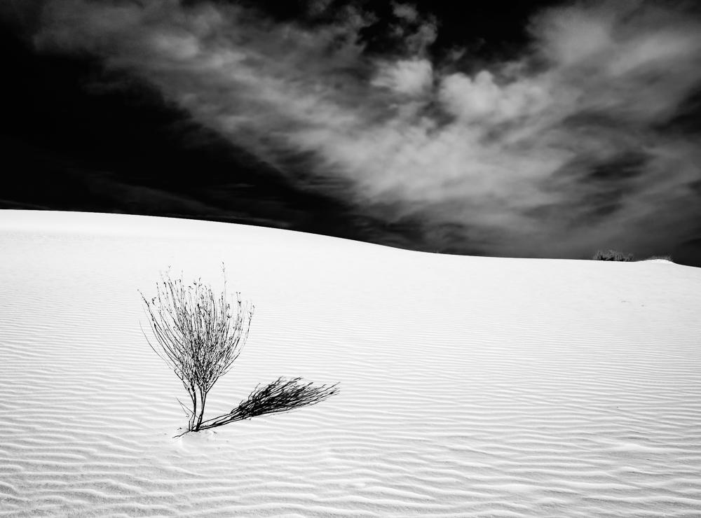 Yucca Sands