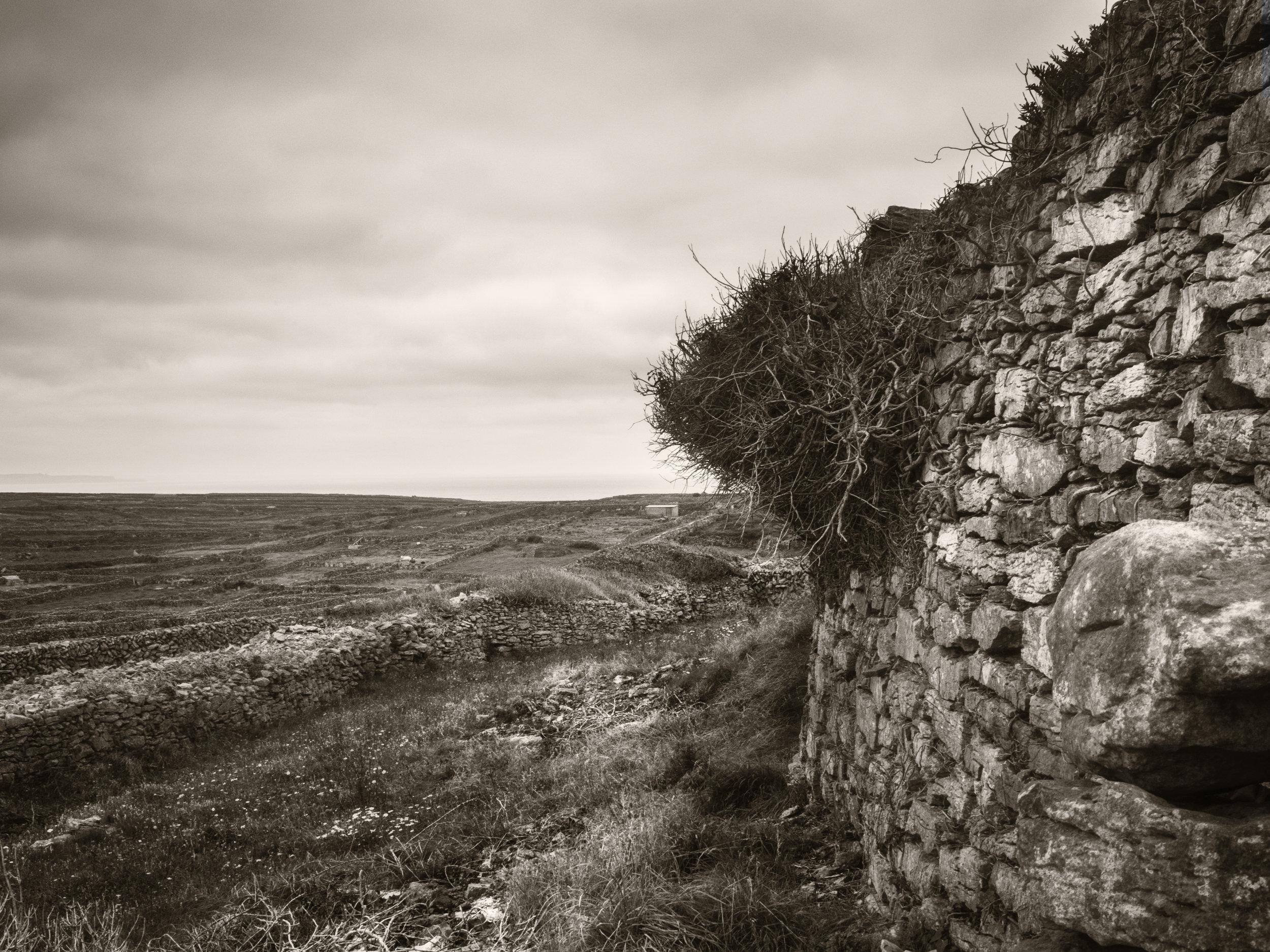 Aran Walls 26