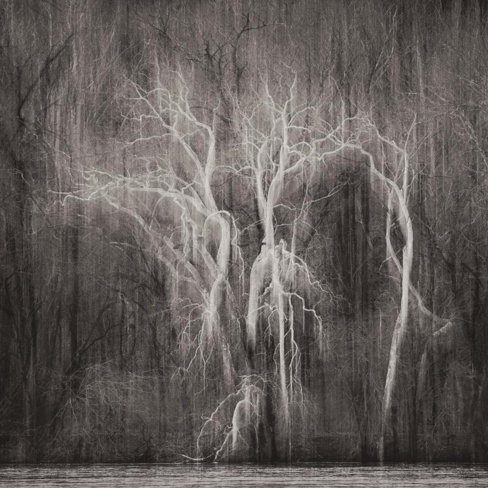 ©Sarah Hood Salomon