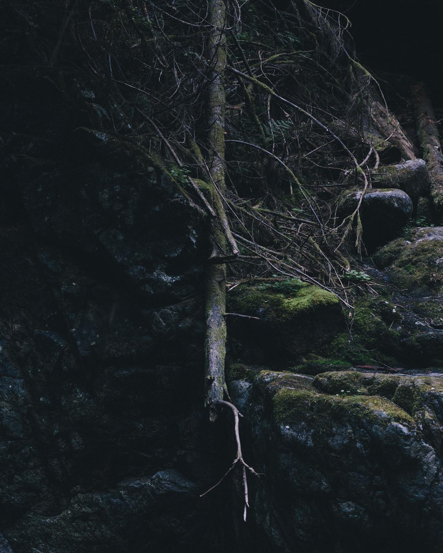 lynn valley-2.jpg