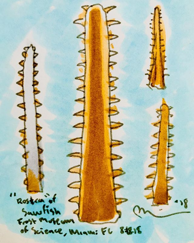 Endangered Sawfish