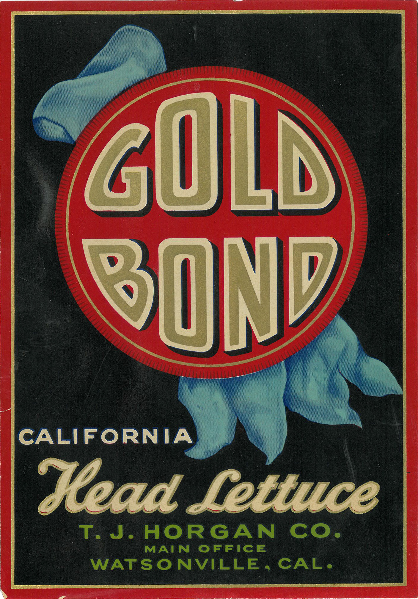 Gold Bond Lettuce.jpg