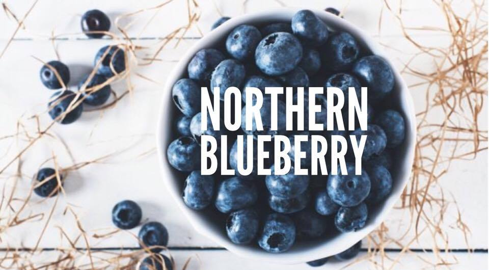 Ripe and juicy blueberries.