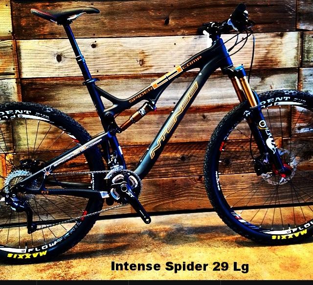 Intense Spider 29.JPG