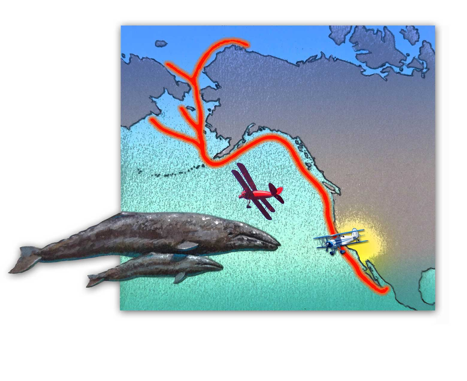 Gray Whale migration pattern.  They pass by San Diego in the winter between December and March.