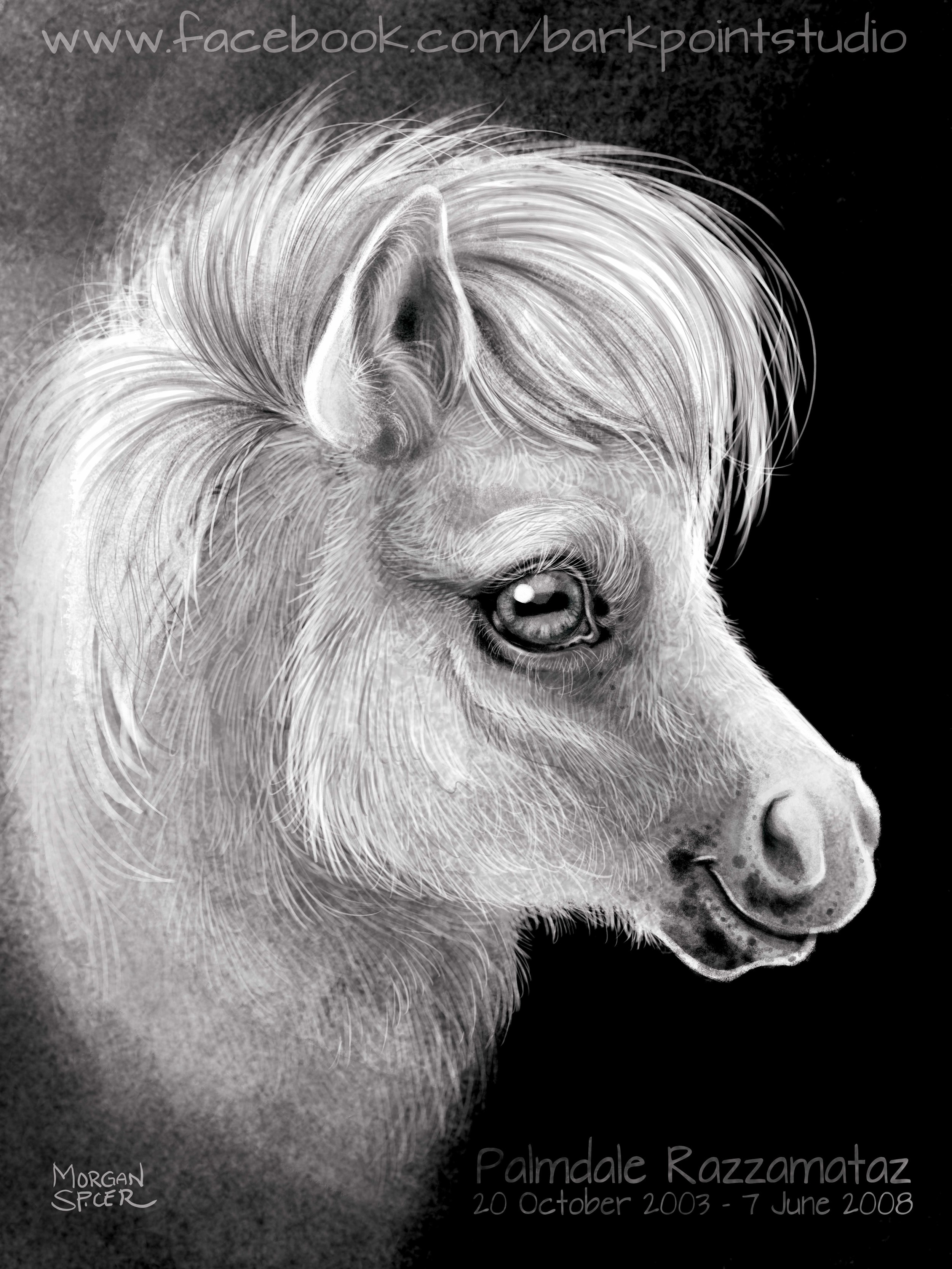 PonyCharcoalPortrait1.jpg