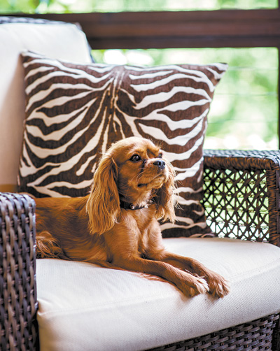 The family's beloved Cavalier King Charles Spaniel feels right at home.