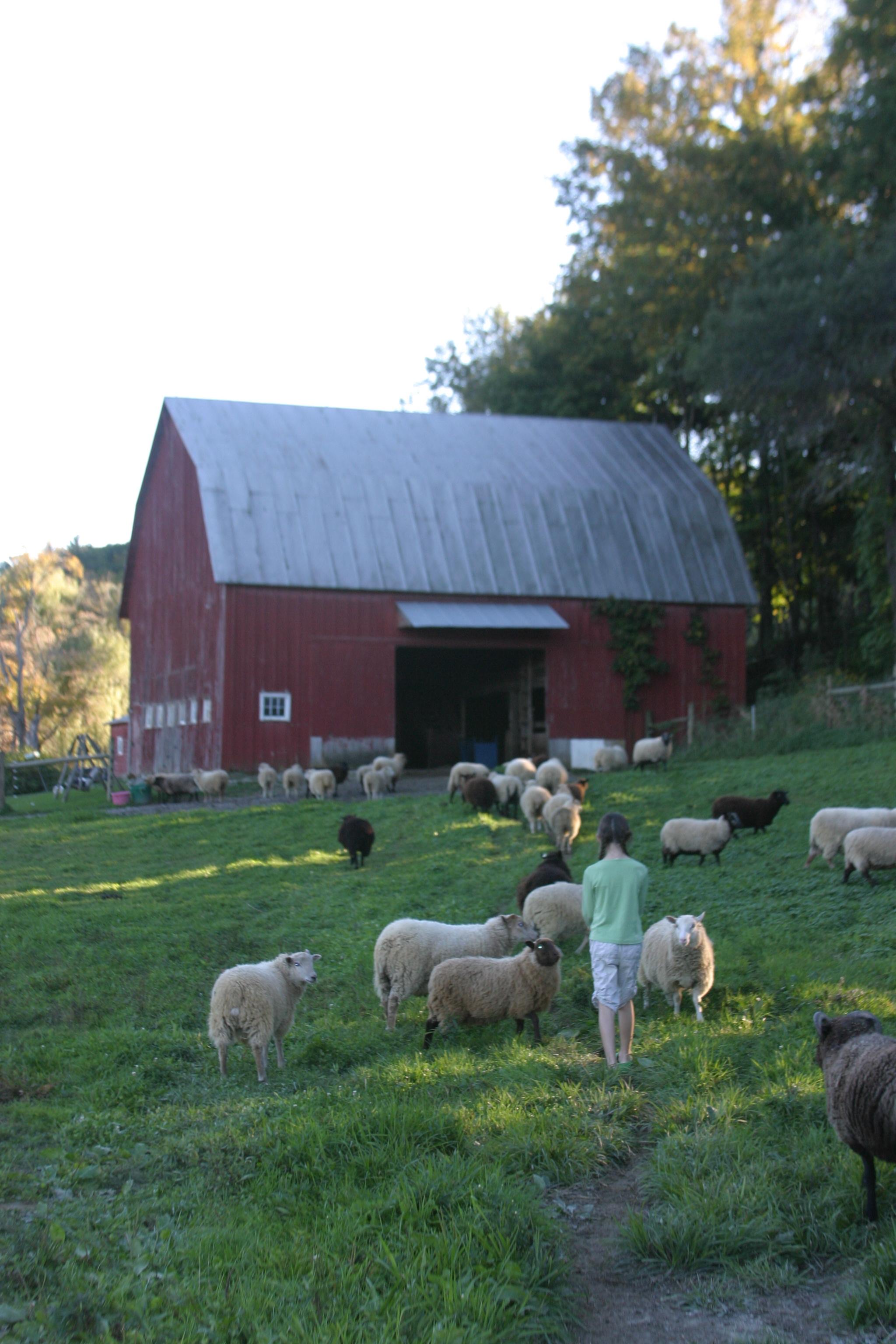 sheep barn.JPG