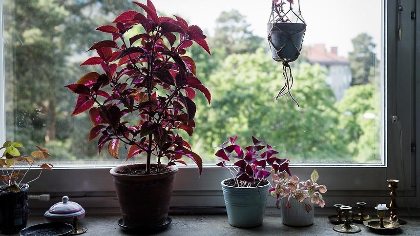 rödaväxter.jpg