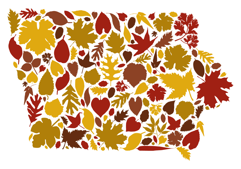 Domestica — Leafy Iowa