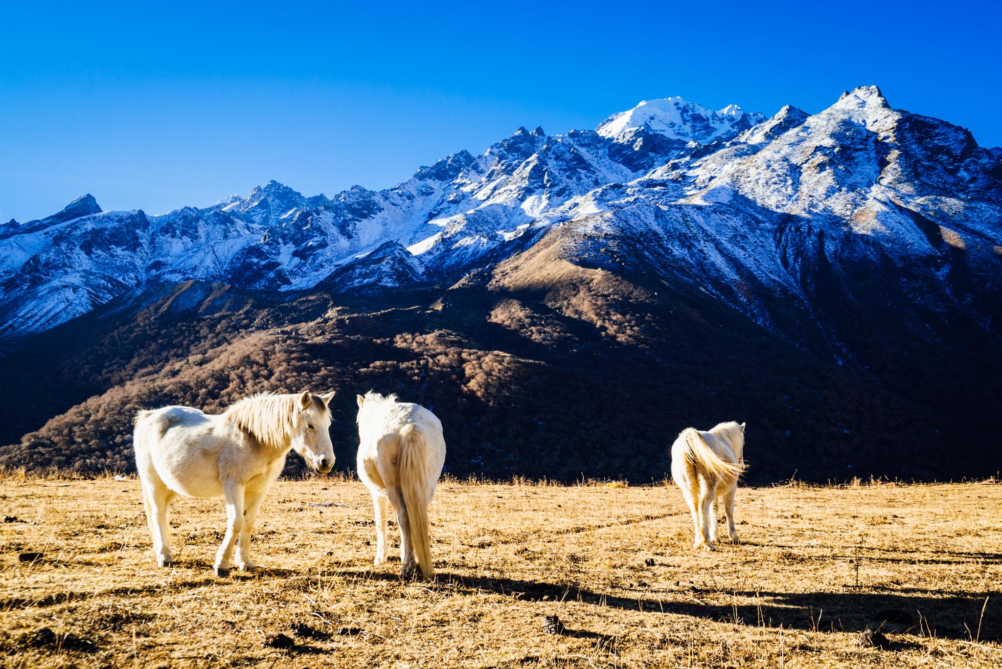 Langtang-Nepal-A7S-NOV15-42.jpg