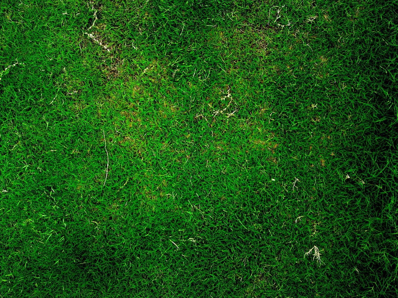 grass_texture231.jpg