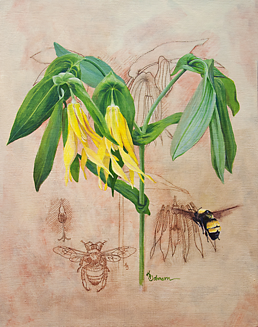 Brought to Life: Bellwort and Bee