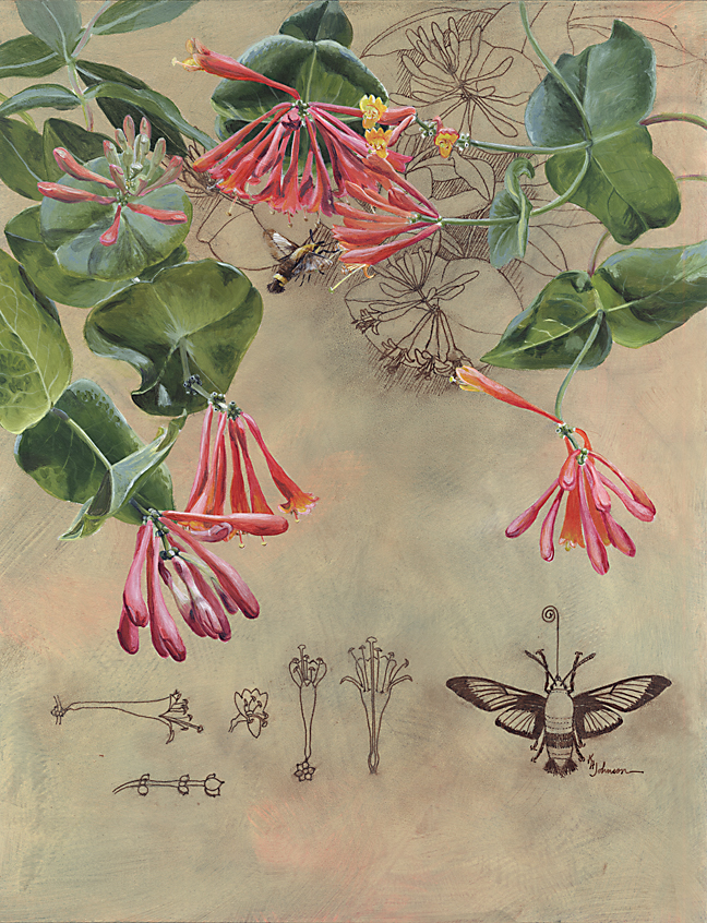 Brought to Life: Honeysuckle and Snowberry Moth