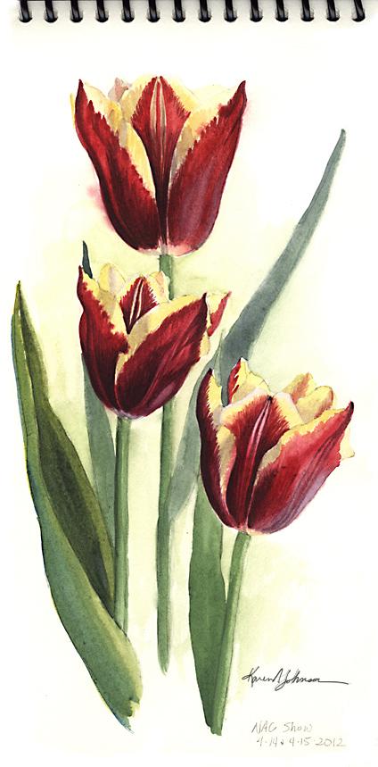 Red Tulip sketch