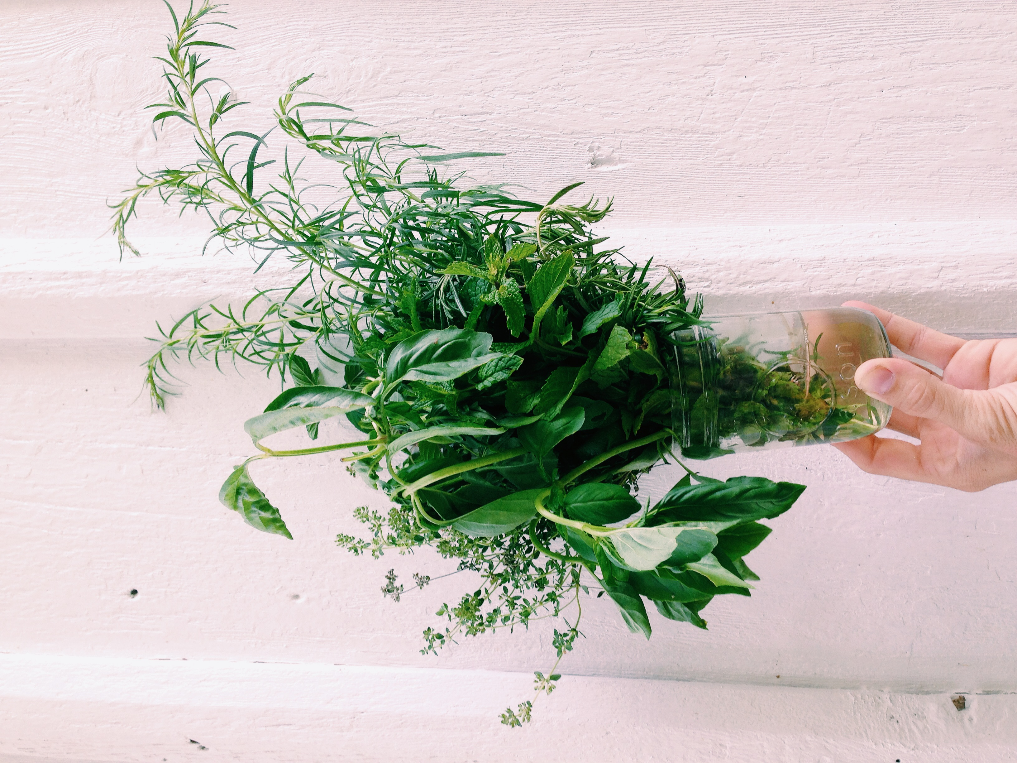 Herbs: Dill, Basel, Thyme, Rosemary, Mint, etc...