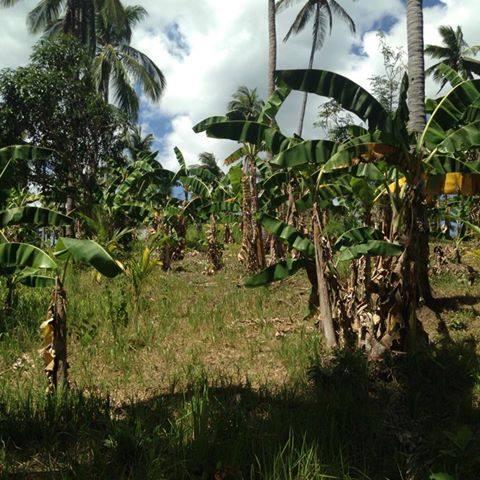 The Land at Tiaong 9.jpg