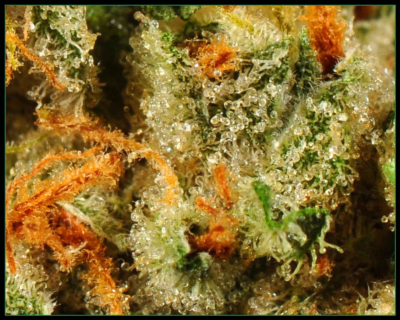 bmbz-pics-1-weed3.jpg