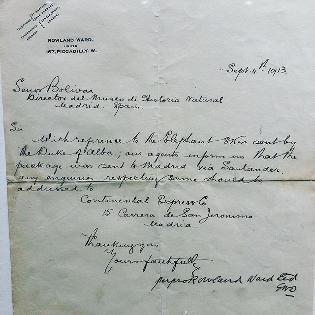 Aquí la carta donde en 1913 se le informaba al Director de Museo de Ciencias Naturales que le iba a llegar una piel de elefante, cazado por el Duque De Alba, vía Santander. Es el que hoy en día se expone. #misiva #escritoconpluma#duquedealba #museo #elefante