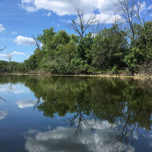 Water. Bugs. Silence. Paradise is a bike ride away. #bikechi #northbranchtrail