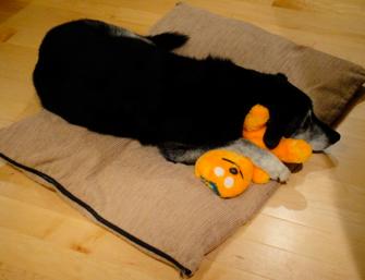 Sleeping with Pumpkin Dec 2010