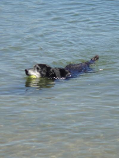 swimming aug 2010