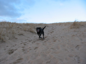 Dunes-Jan-2006.jpg