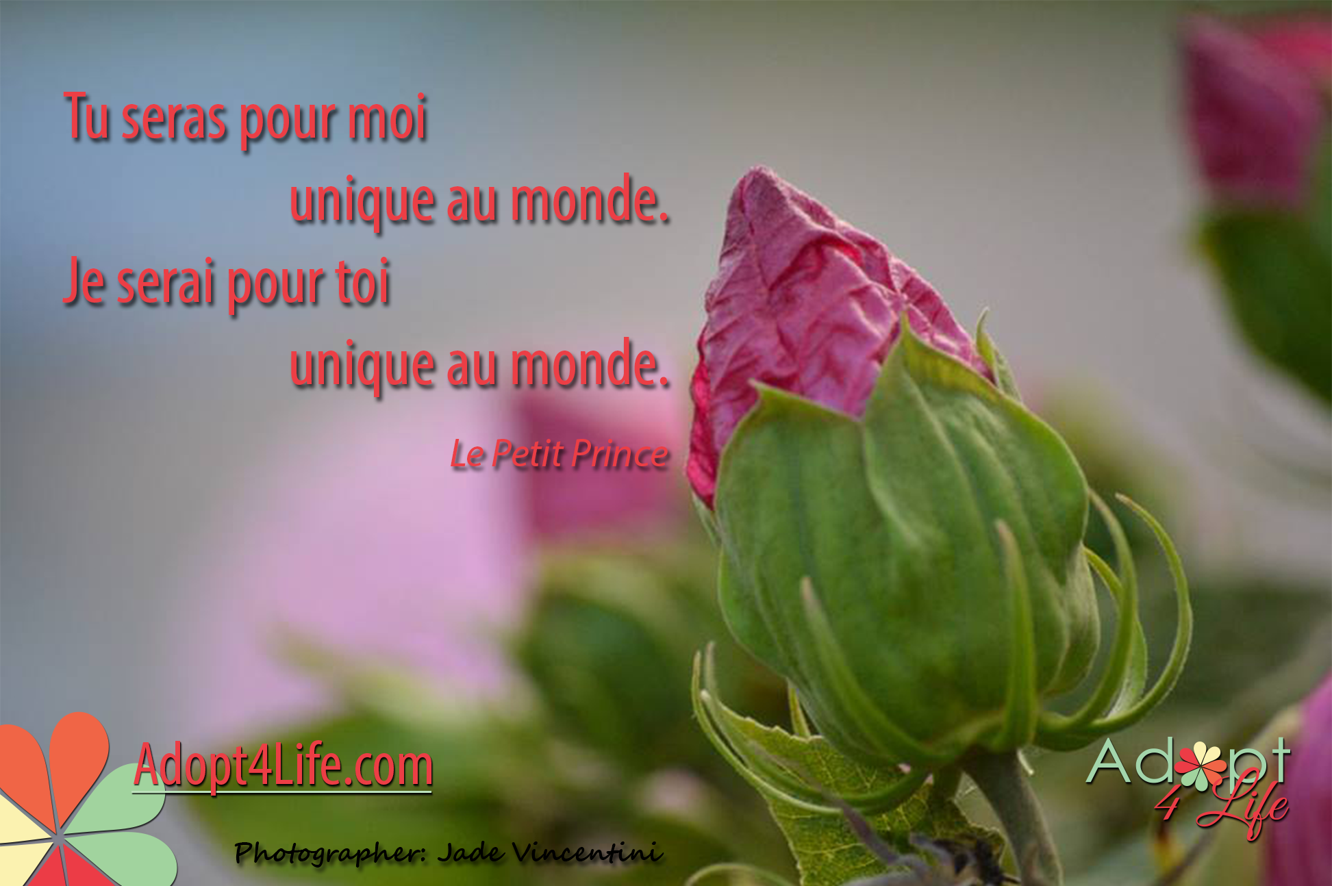 Facebook_AdoptionQuote_French_012_Dec2014_png.png