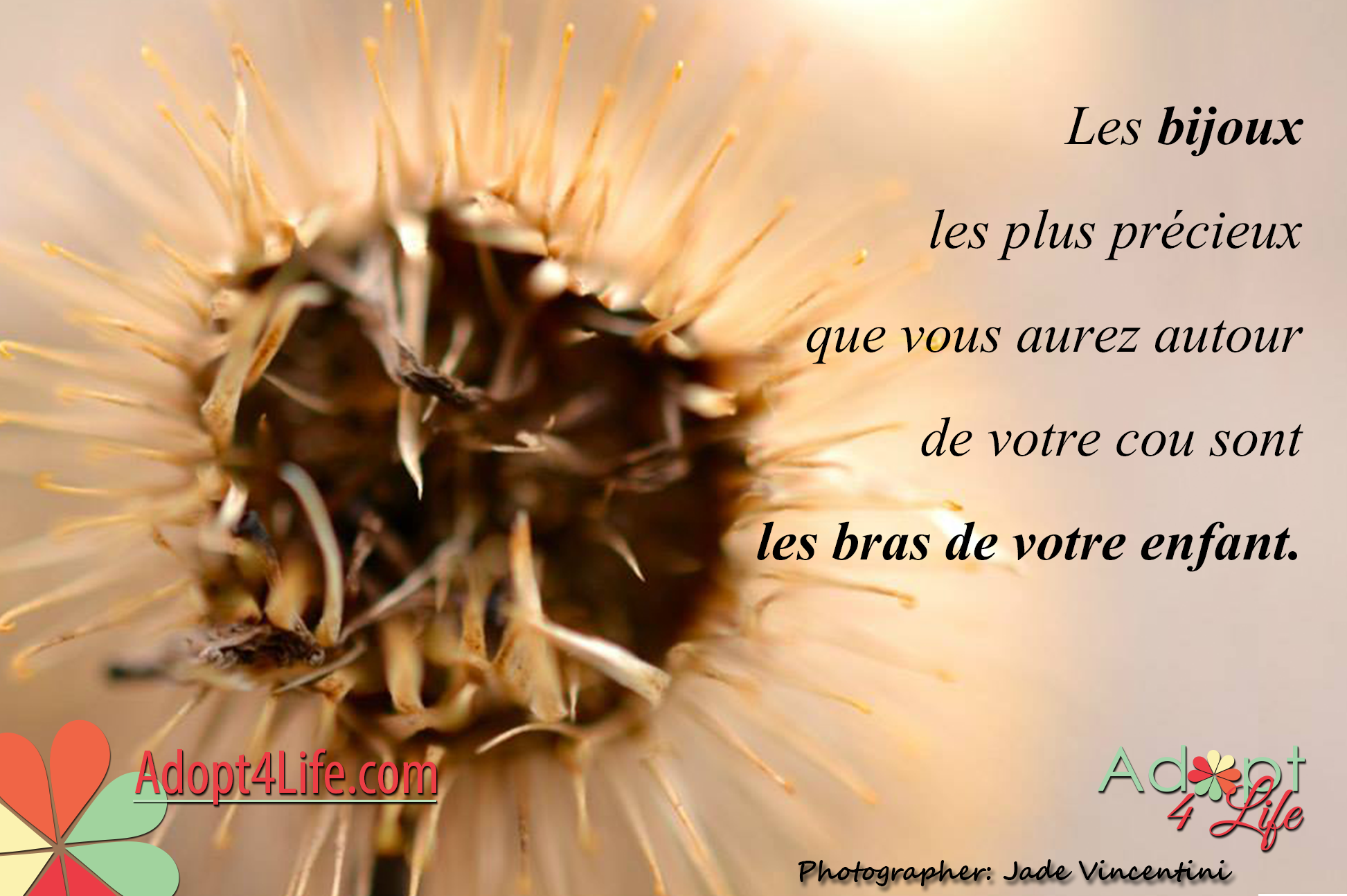 Facebook_AdoptionQuote_French_014_Dec2014_png.png