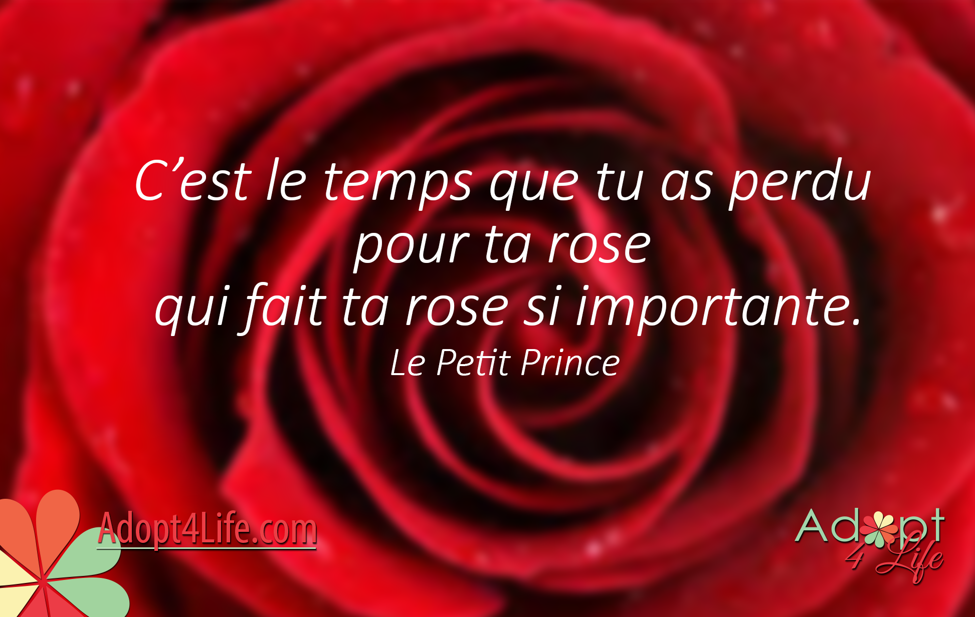 Facebook_AdoptionQuote_French_017_Dec2014_png.png