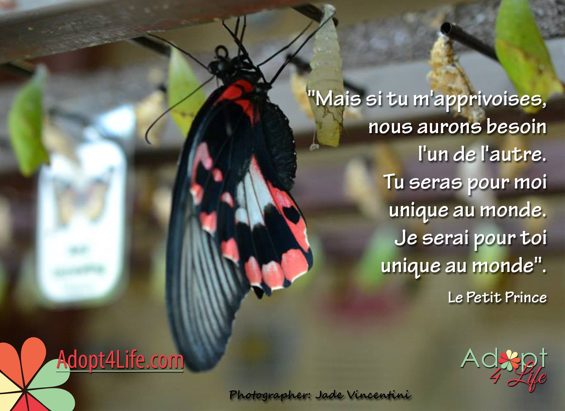 Facebook_AdoptionQuote_French_025_Dec2014_png.png