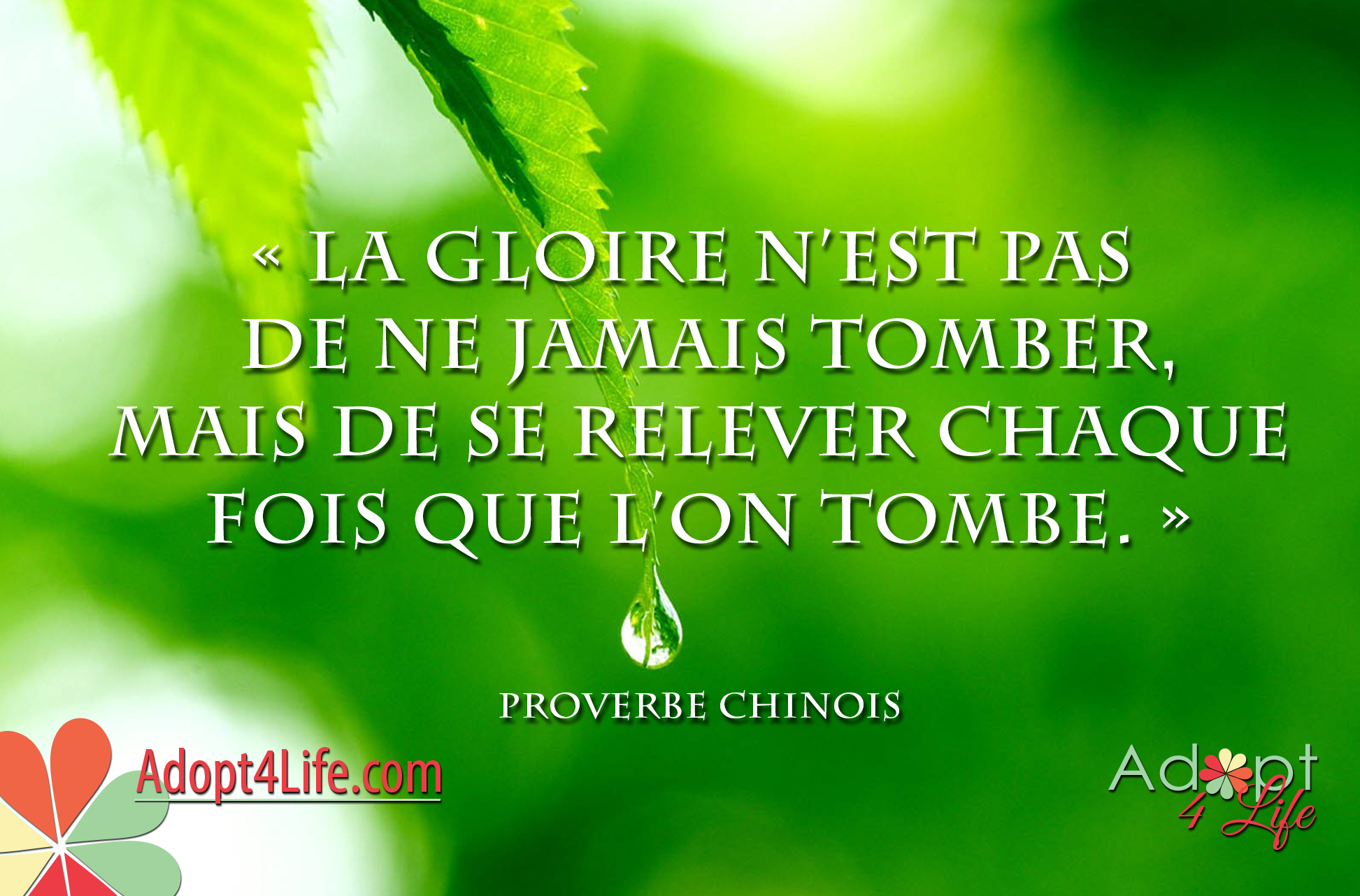 Facebook_AdoptionQuote_French_030_Dec2014_png.png