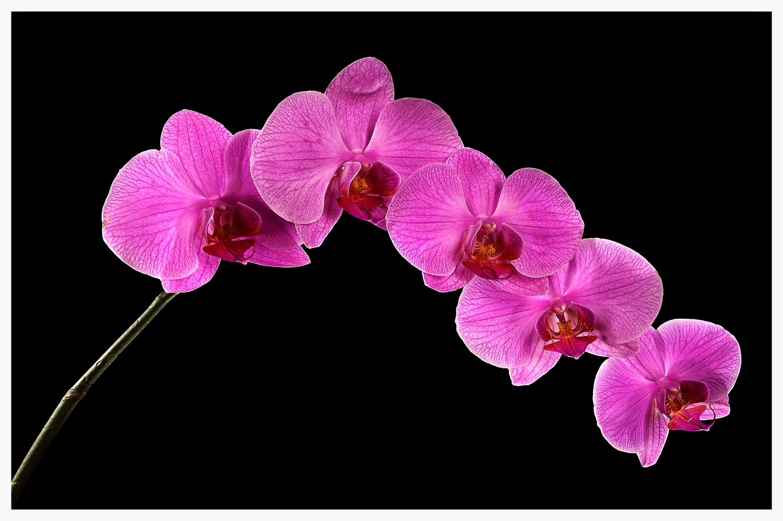 1.28.10.Orchid_H.jpg