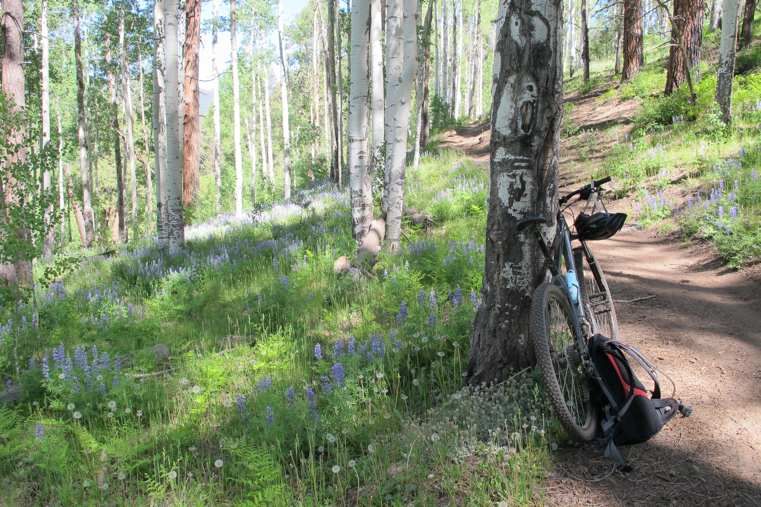 I couldn't be happier that the road and weather led us to Durango. The biking was incredible and carpeted with wildflowers.