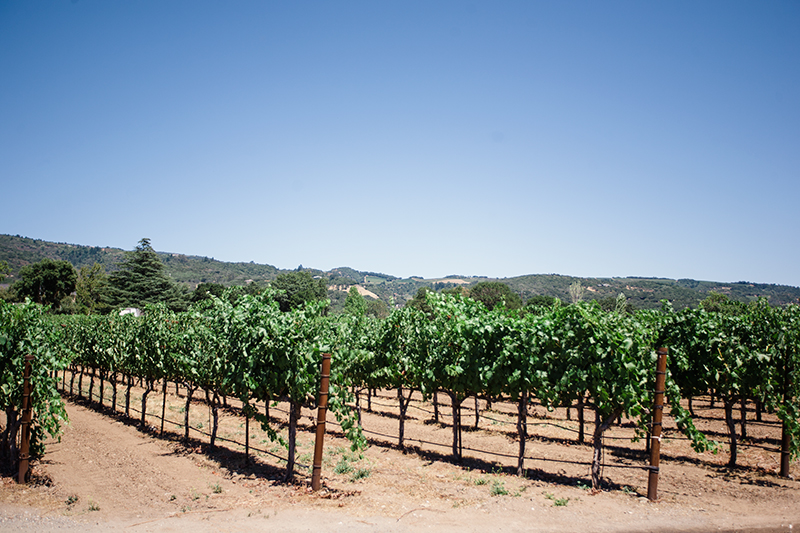 If you are in Sonoma, you must take a trip to Little Vineyards! It's a guarantee good time and wine.