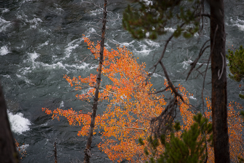 The hike to lower falls was simple, hence its popularity, and the first signs of fall color were scattered around the trail. The view atthe vantage point below is mesmerizing. The power of the river made me thinkof a 100 foot wave breaking ten feet away. I've never been that close to that much water moving.