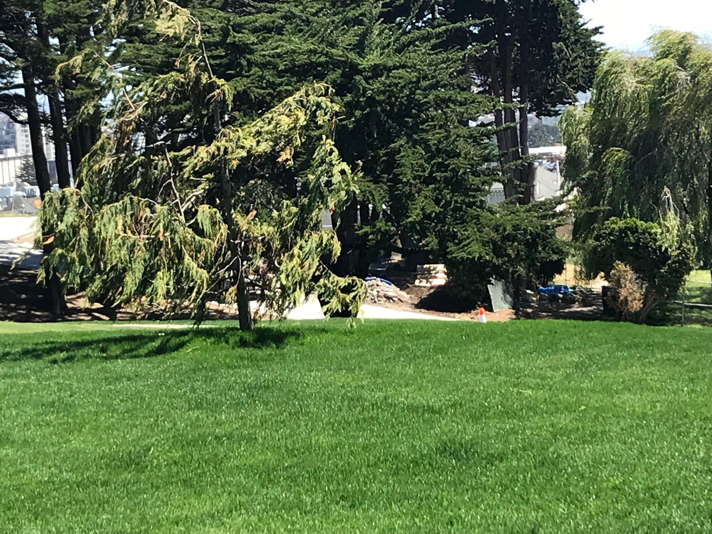 More beautiful grass