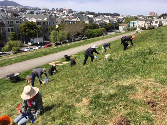 Volunteers scaling the dog tier slope to eradicate the pesky plants.