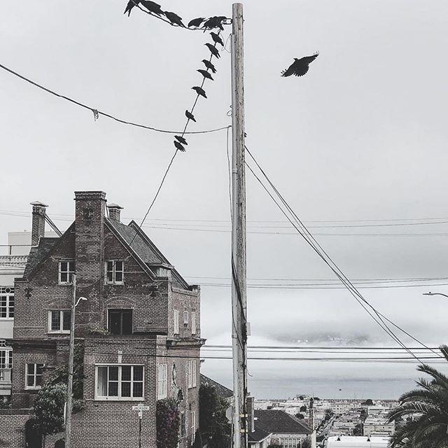 #Repost 👁🦅🦅🦅 #sanfrancisco #pacificheights #thebirds #alfredhitchcock #birdmeeting #threeeyedraven #altaplazapark